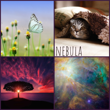 nebula moodboard: an actual nebula, a butterfly, a cat, a tree at sunset