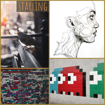 starling moodboard: a starling, line drawing, pac-man ghosts, lines of code